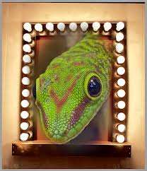 How a Gecko became a Pin-up Star! (Part II)